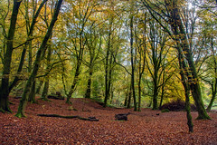 Photo of Autumn Colours of Perthshire.