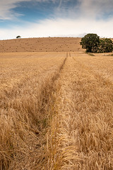 Photo of Mearns Harvest