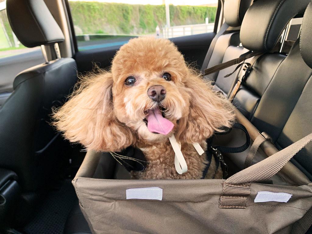 03_AVIS也提供寵物安全籃,毛小孩不需要受限於侷促的寵物籠中,飼主也不用擔心毛孩的口水或毛髮會弄髒座椅或車內環境。