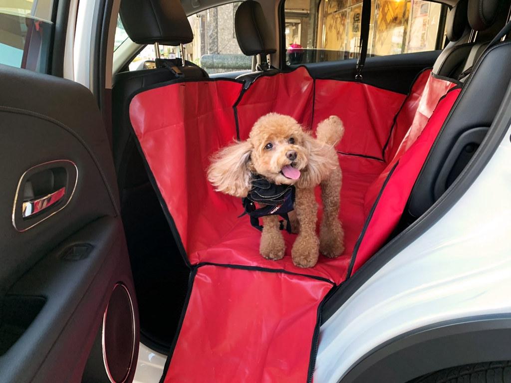 02_即日起至12月30日止,凡攜帶寵物至指定AVIS租車點租車,即可免費租借寵物車用吊床。