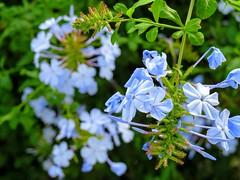 just flowers • apenas flores • solo flores