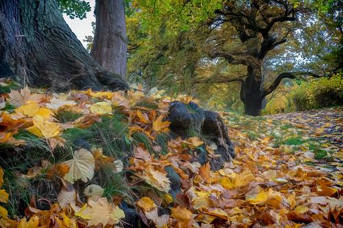 Autumn in Elsinore 1