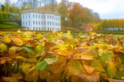 Autumn in Elsinore 2