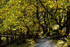 Photo of autumn glow