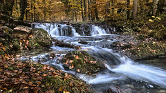 Little Waterfall in the Forest
