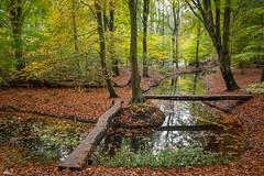 Herfst in het Belevenissenbos