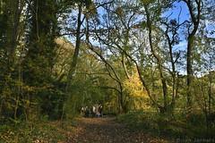 "Woodland Path <a style=""margin-left:10px; font-size:0.8em;"" href=""http://www.flickr.com/photos/43603376@N05/50554466832/"" target=""_blank"">@flickr</a>"