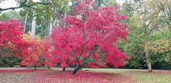 Photo of Autumn colours