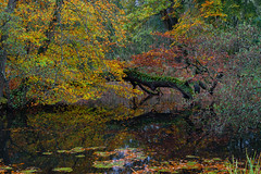 Photo of Autumn Reflections-4737