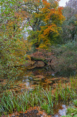Photo of Autumn Reflections-4742