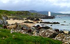 Photo of Singing Sands, Islay, Scotland