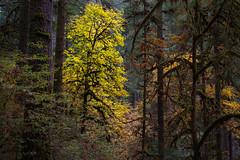 Autumn Beacon