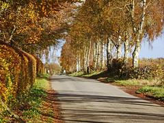 Photo of Autumn Road