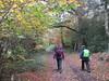 UK - Hertfordshire - Near Berkhamsted - Walking along footpath through woods