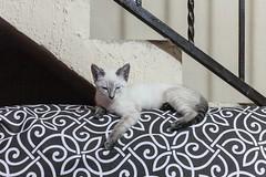 Coco over the sofa