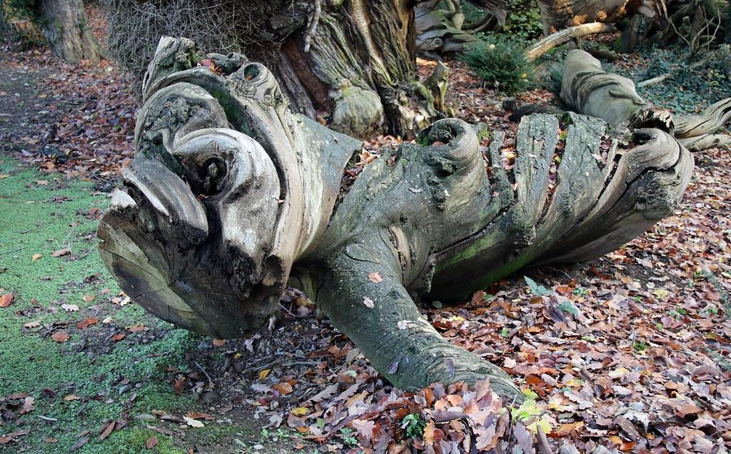 A Shobden Wood Lizard.