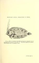 Anglų lietuvių žodynas. Žodis lefteyed flounder reiškia lefteyed plekšnė lietuviškai.