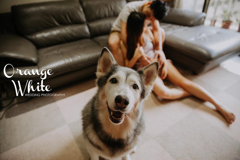 橘子白,攝影,工作室,造型,Anita俐婷,孕婦寫真,孕婦照,孕媽咪,妊娠寫真,女攝影師,便宜,寵物寫真,哈士奇,寵物入鏡,狗,美式風格