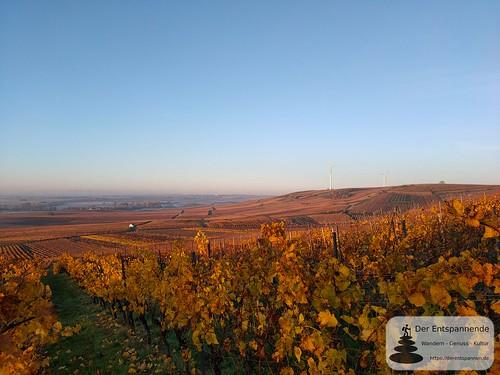 SunriseRun in den Weinbergen über Selzen und dem Selztal