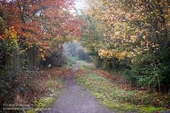 Photo of 20201106 - Walks Near Newbury - 004-Edit