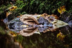 Herbst am Mühlbach - explored