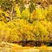 Rush Creek Reflection, June Lake Loop 10-20