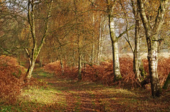 Photo of Kinclaven Woods