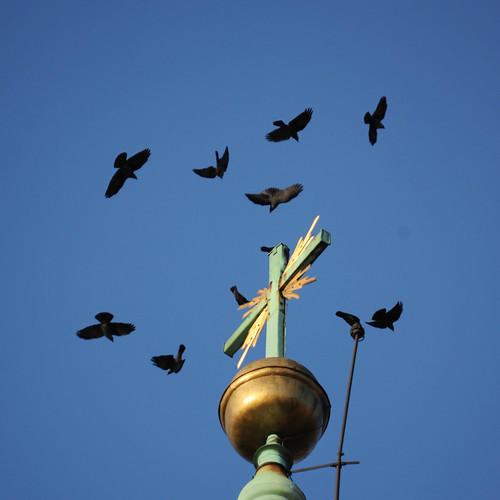 Crows, Wawel Cathedral II