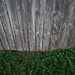 Wood Fence in the Grass
