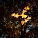 Slow Autumn Flow