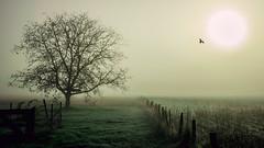 """L'oiseau qui voulait toucher le soleil • <a style=""""font-size:0.8em;"""" href=""""http://www.flickr.com/photos/161151931@N05/50583652022/"""" target=""""_blank"""">View on Flickr</a>"""