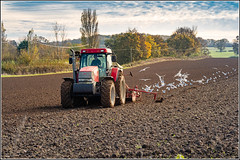 Photo of Sowing the autumn seed on the farm