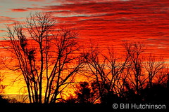 November 3, 2020 - Silhouetted trees at sunrise. (Bill Hutchinson)