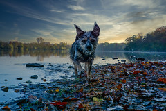 Seehund :-)