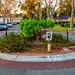 Traffic Circle - Hyde Park Neighborhood - San Jose - California