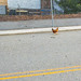 Why Did the Chicken Cross the Road - San Jose - California