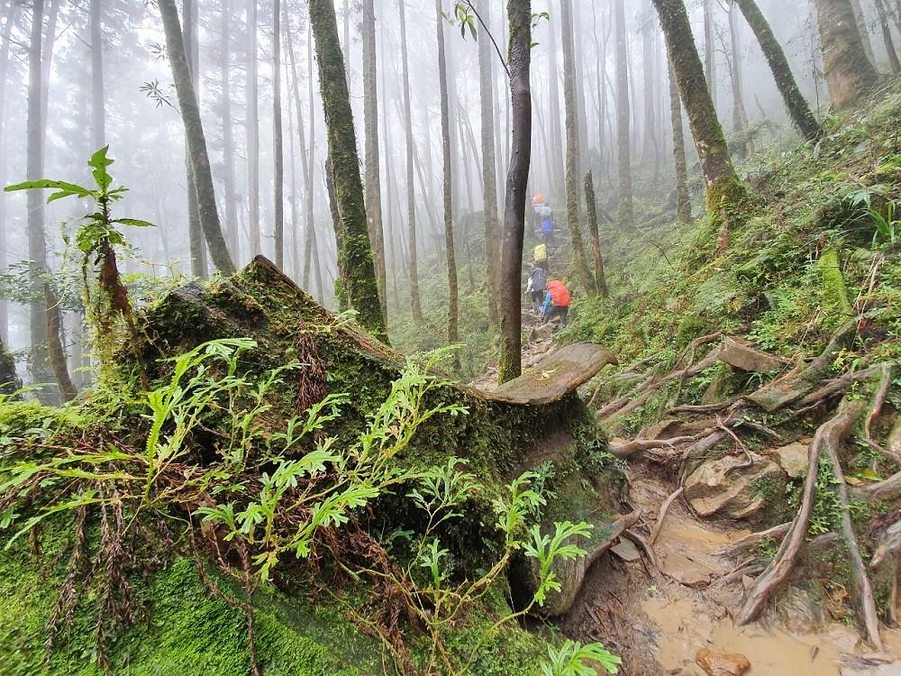 圖6_沿途山林為多雨潮濕的天氣,使得沿路林相豐富且生態多元,別忘了留意眼前美景或腳下生態