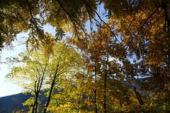 Autumn colors @ Circuit Jean-Jacques Rousseau @ Thônes