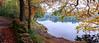 Roddlesworth Woods Panorama