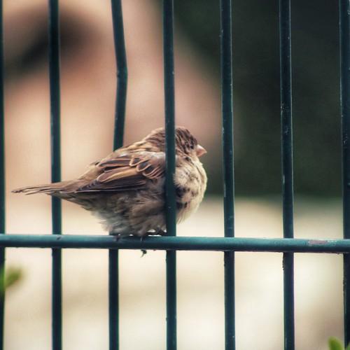 Jail Bird, From FlickrPhotos
