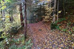 Forest @ Thônes