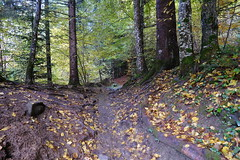 Trail @ Forest @ Thônes
