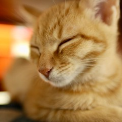 sleeping beauty #cat #猫 #ネコ #ねこ #Katze #chat #gatto #gato #feles #кошка #KAT #gato #?? #??? #???? #???? #ko?ka #kass #???? #муур #pisic? #Tokyo #日本 #東京 #Japan #ivvaDOTinfo