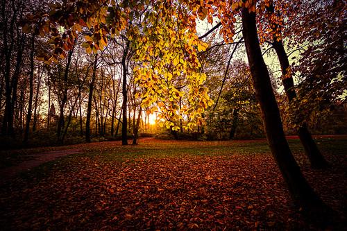 Herbststimmung im Park