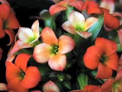 Floretes en un test