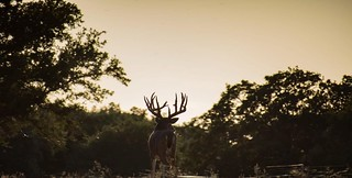 Texas Trophy Hunting - Brownwood 115