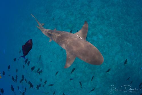 Underwater Photography - Bora Bora