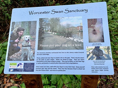 Photo of Worcester Swan Sanctuary 2020