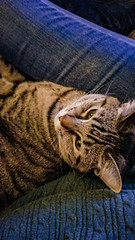 Henry snuggles