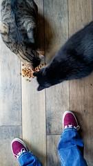 004: Cat treats